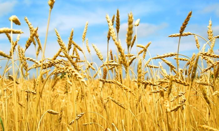 В России созданы наночастицы для ускорения роста семян и растений