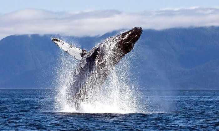 Новая двухлинзовая камера показала, каково это – прокатиться на спине у кита