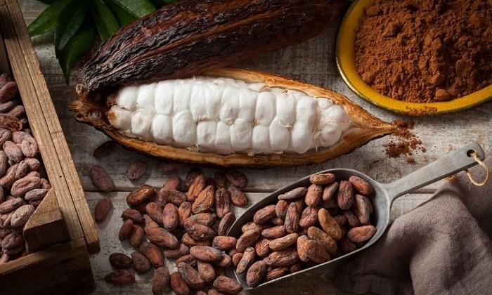 Антропологи переписали историю шоколада