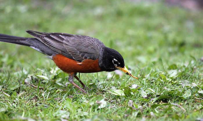 Ученые узнали о влиянии рациона на эволюцию птиц