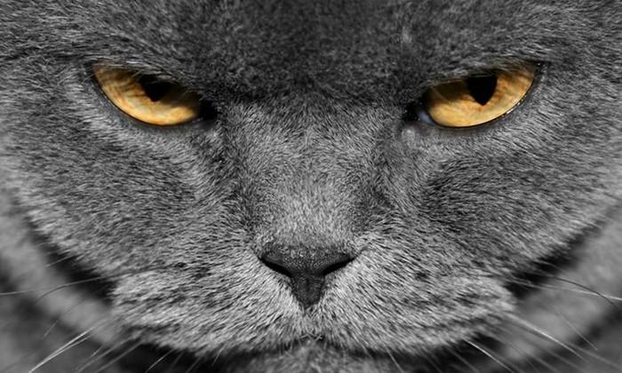 Стало известно истинное отношение котов к людям
