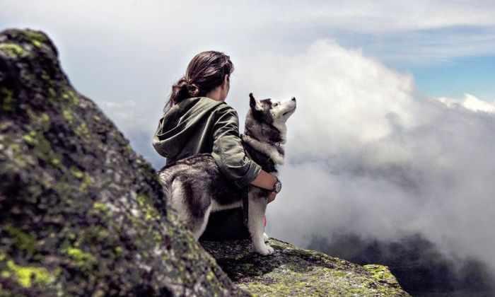 Около Стоунхенджа нашли останки древней домашней собаки