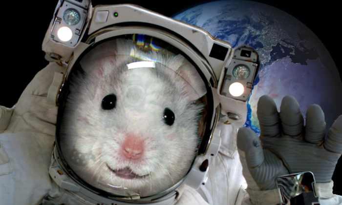 Россия запустит живых существ на рекордную высоту в космос