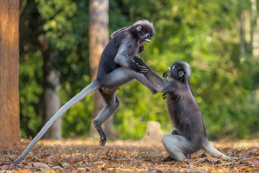 В мире животных 9a50179839acab59c7ae7edffafab886