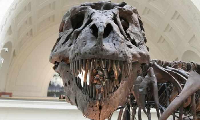 Кости из Узбекистана рассказали о происхождении тираннозавров