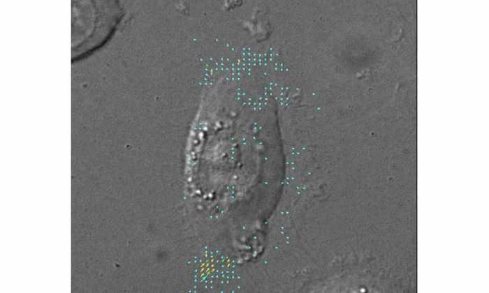 Ученые обнаружили, что клетки кожи