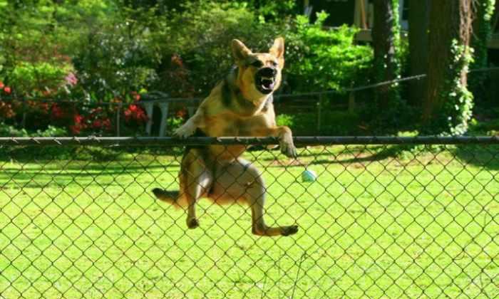 Инженеры научили робота-собаку лазить через забор