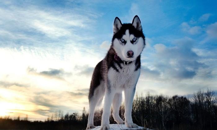 Ученые уличили собак в манипулировании людьми ради выгоды