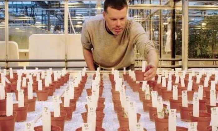 Выращенную на «марсианской» почве еду признали съедобной
