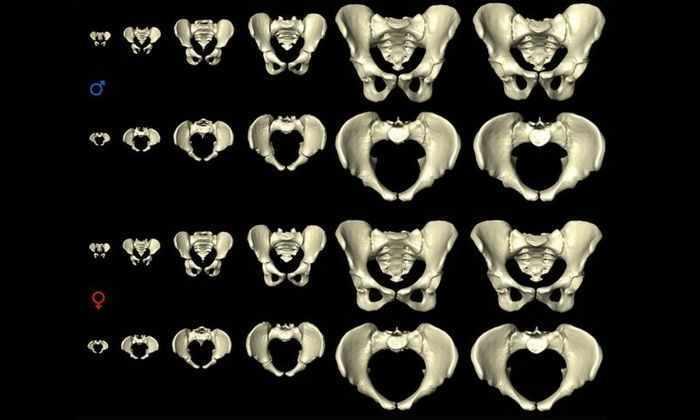 Женские бедра меняют ширину на протяжении жизни