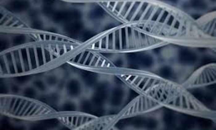 Эндогенные ретровирусы обнаружены в геномах многих живых существ