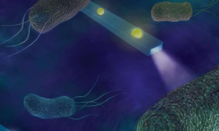 Ученые научились чувствовать и «слышать» клетки