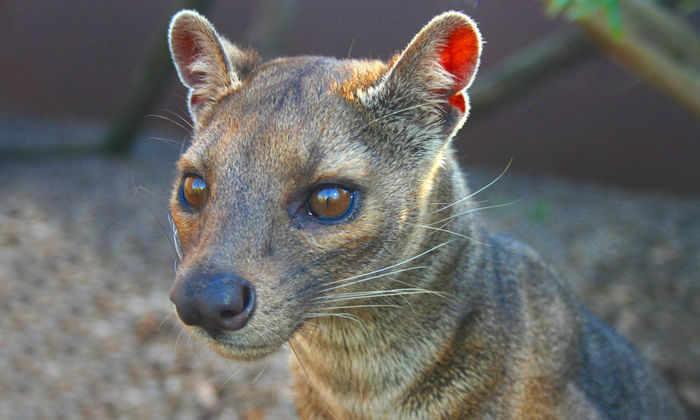 Редкие виды играют неожиданно важную роль в экосистемах