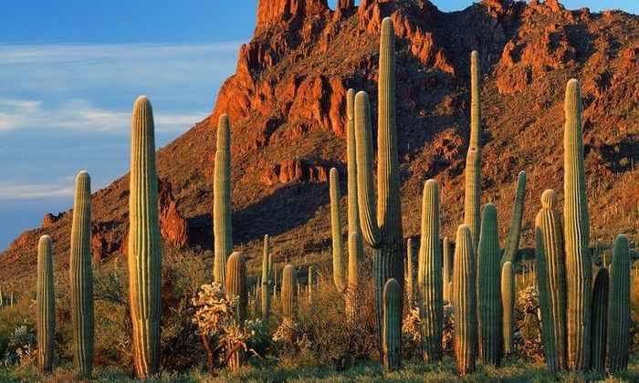 Видео: пустынный кактус очищает загрязненную воду