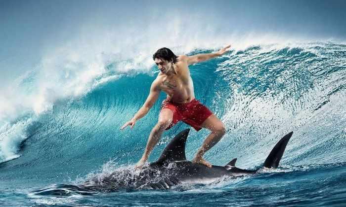 Видео: как оседлать акулу и остаться невредимым