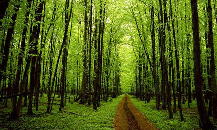 Деревья показали пример противостояния глобальному потеплению