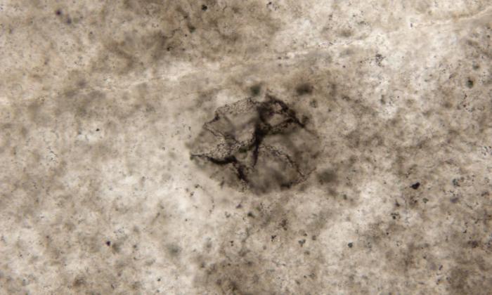 Ученые отыскали  бактерию возрастом неменее  2,5 млрд  лет