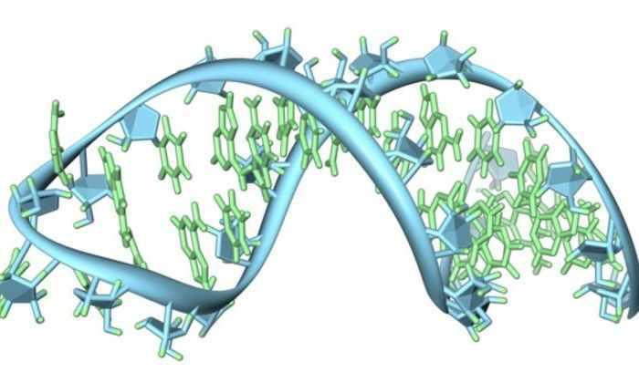 Составлена первая опись контактов РНК и белков в ядре клетки