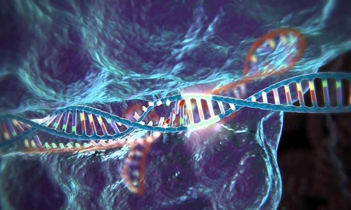Ученые разобрались, как эволюция борется с вредными мутациями