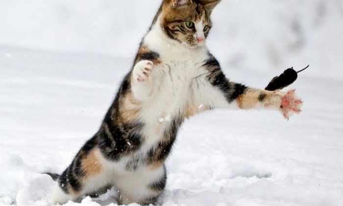 Коты используют причинно-следственную связь во время охоты