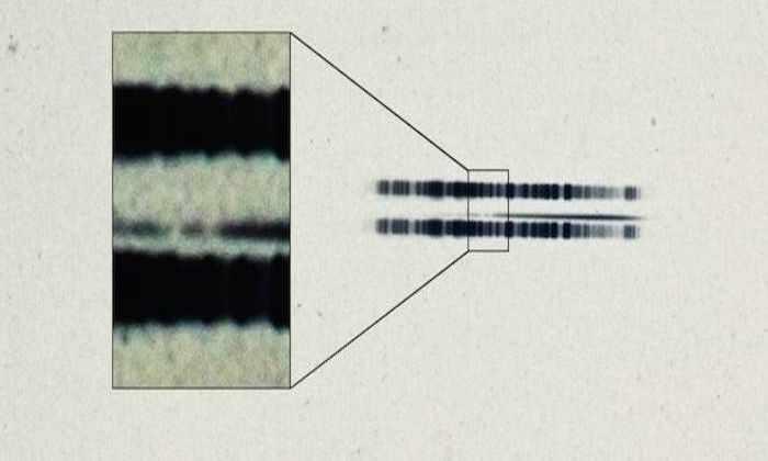 Древнейший след от экзопланеты обнаружили на пластинке 1917 года