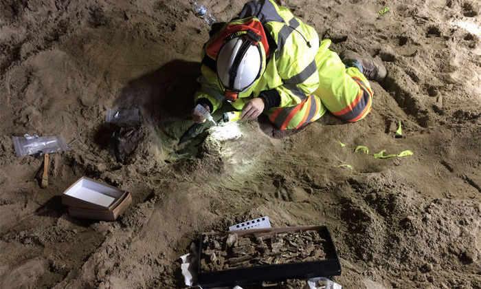 В метро США нашли останки мастодонтов возрастом 10 000 лет