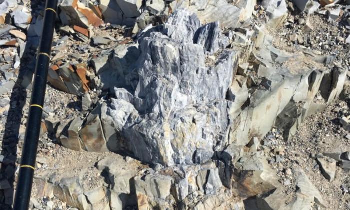 Окаменелый лес возрастом 280 млн лет обнаружили в Антарктиде