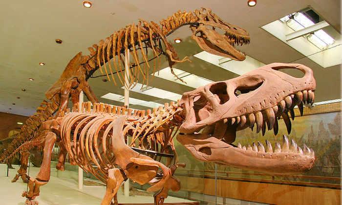 Google запустил онлайн-выставку сразу 60 естественных музеев по всему миру
