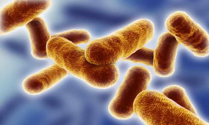 Почвенные ГМО-бактерии могут стать материалом для экологичных компьютеров