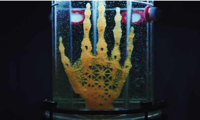 Искусство будущего: художница выращивает скелет руки в лаборатории