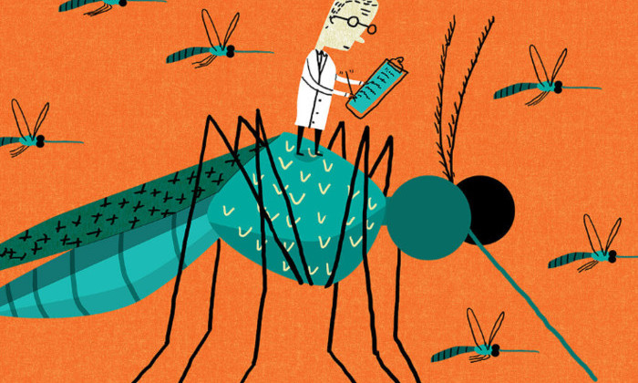 Как заставить комаров не кусаться: найден новый способ