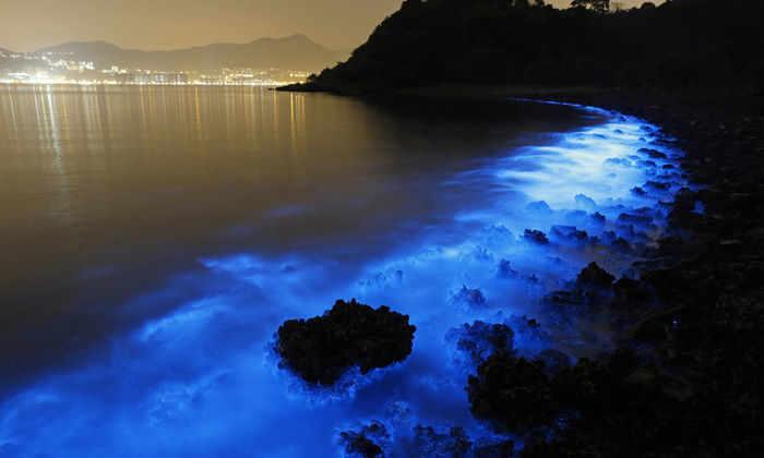 Природный феномен заставил море в Китае замерцать голубым светом