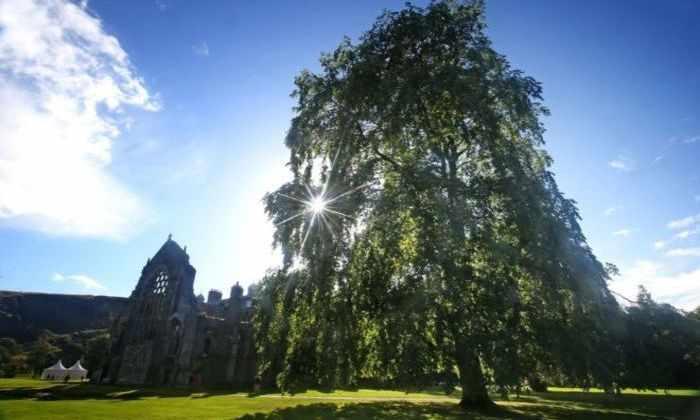 В саду английской королевы нашли два дерева, вымерших полвека назад