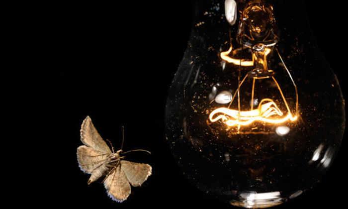 Городские мотыльки возненавидели свет