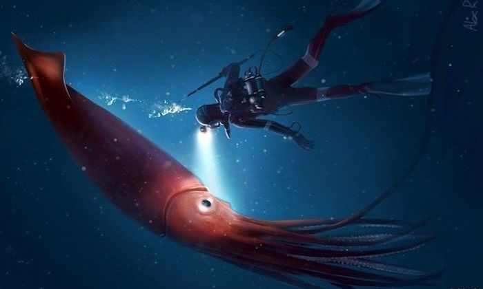 В глубине океана могут обитать кальмары размером с грузовик